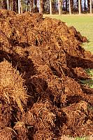 kozzi-11147264-manure for organic farming-1183x1774